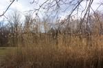 Reeds_3